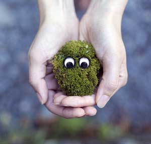 Reciclo dei rifiuti organici domestici